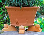 so that no waterlogging arises, put pot on clay feet