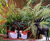Basket with various ferns, Gaultheria, Carex (sedge)
