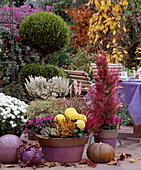 Bowl with Calluna broom heath, Aster, Erika sprinkles, Dendranthema