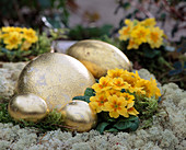Ostrich egg and chicken egg with gold leaf