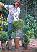 Rinsing potted plants in the spring on a warm day