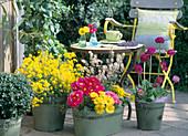 Pots with Alyssum saxatile 'Berggold', Primula elatior 'Crescendo