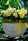 Viola cornuta 'Patiola Pure Lemon Yellow'