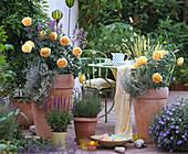 English Roses, David Austin 'Golden Celebration', Lavandula