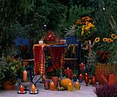 Late summer balcony, Actinidia, Calluna, Caryopteris, Rudbeckia