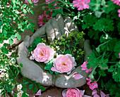 Cement hands as a birdbath with Rosa 'Mary Rose'