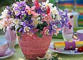 Aquilegia caerulea 'Spring Magic'