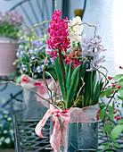 Hyacinthus orientalis 'Jan Bos', 'Madame Sophie', 'Delft Blue'