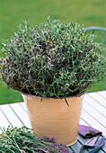 Cut back lavender