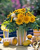 Helianthus decapetalus (perennial sunflower)