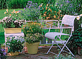 Terrace with flower bank, Nicotiana 'White' (ornamental tobacco)