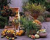 Lantana camara hybrid 'Sunkiss', rhynchelytrum repens, ornamental squash