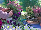Swap dead flowers in late summer. (3/3)