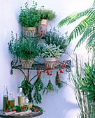 Corner wire shelf with herbs, Origanum, Thymus, Hyssopus