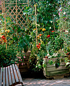 Vegetables on the balcony