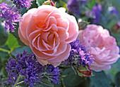 Rose 'Bonica 82'