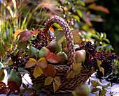 Basket of pyrus (pear), sambucus (elderberry), rubus (blackberry)