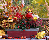 Autumn balcony with pumpkin figures, Cucurbita, Heuchera, 'Amber Waves'