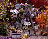 Holzetagere: Chrysanthemum, Calocephalus / Stacheldraht, Brassica / Zierkohl, Cyclam
