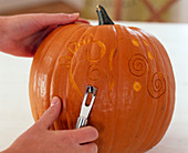 Carving pumpkin, cucurbita pepo (pumpkin)