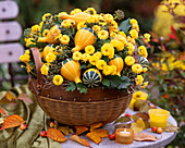 Chrysanthemum, Cucurbita (pumpkin), Hedera (ivy)