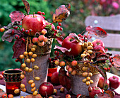 Malus (apple and ornamental apple), rosa (rosehip), phoenix (date)