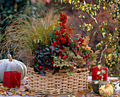 Carex testacea-Herbstsegge, Pyracantha-Firethorn, Gaultheria 'Winter Pearls'