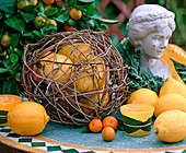 Citrus limon / Zitrone, Citrofortunella microcarpa