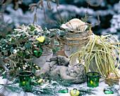 Hedera 'Glacier' (ivy), Carex hachijoensis 'Evergold'