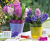 Hyacinthus (hyacinth), Vaccinium (blueberry branches