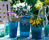 Crocus (yellow, white, purple) in glass pots (blue-frost)