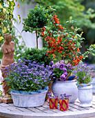 Chaenomeles (ornamental quince), Buxus (Box), myosotis