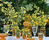 Ribes aureum (gold currant) in different jars