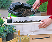 Plant flower box
