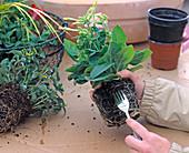 Plant clay pot