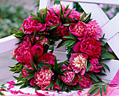 Paeonia (peony) flowers stuck to the wreath as bank decoration