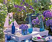 Hydrangea, Salvia patens (splendid sage)