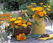 Calendula officinalis (marigold), panicum (millet)