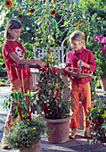 Girls picking Lycopersicon (tomato)