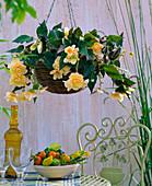 Begonia 'Champagne' (Ampel Begonia)