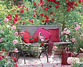 Rose 'Flame Dance' (climbing rose)