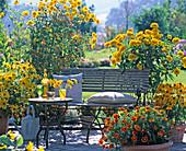 Tagetes (Marigolds
