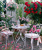 Rosa 'Heidefeuer'-Bonica', 'Madame Figaro'
