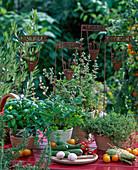 Ocimum (basil), petroselnum (parsley), allium (garlic)