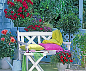 Pink 'heather' (Rose) stem, Laurus (Laurel)