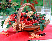 Ribes (red and white currant, gooseberry)