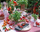 Ocimum (basil), Lycopersicon (tomato)