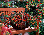 Basket with roses (rosehip), crataegus (hawthorn) on wooden bench