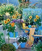 Helianthus (sunflower), Solanum (blue solanum shrub)