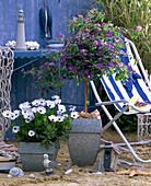 Solanum (gentian tree), Osteospermum (cap basket)